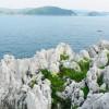 白崎海洋公園(白崎海岸)